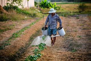 petani, nelayan, penambak udang