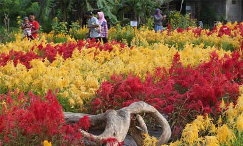 kebun bunga asri