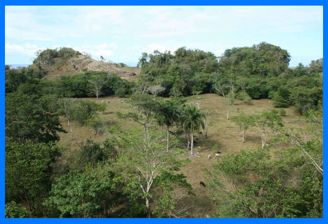 konservasi hewan di hutan karibia
